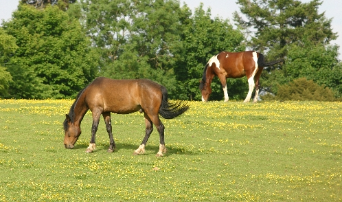 Equiculture_short_v_long_grass_2.jpg