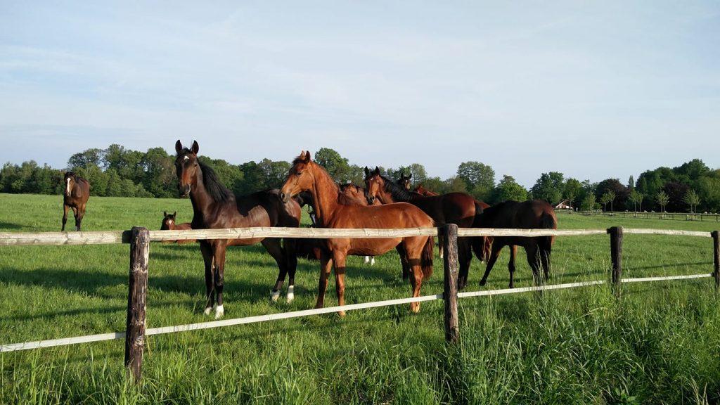 paardenweides en Jakobskruiskruid