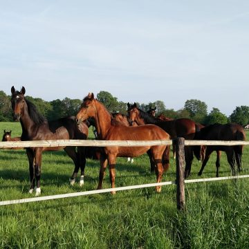 Paardenweides en Jakobskruiskruid, hoe is het te voorkomen en hoe kom je er af?